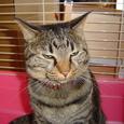 妹の猫・姫ちゃん「 ムゥー」