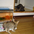 7月22日 先輩猫 vs 後輩猫